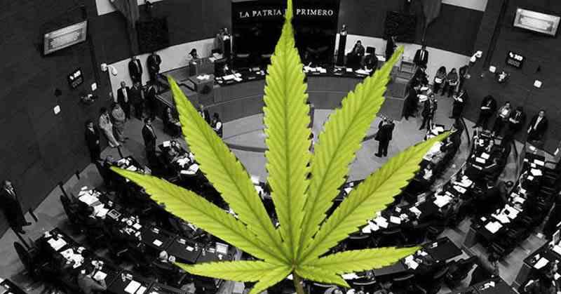 , Pide Senado a SCJ prórroga para legislar sobre cannabis